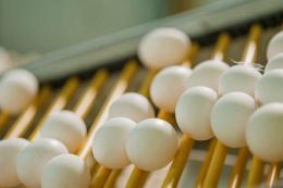 У 2020 році виробництво яєць в Україні скоротилося на 3%