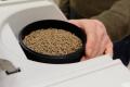 Якісну сировину для кормів складно знайти через поширеність фальсифікату