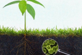 Бактерії для ґрунту сприяють розвитку озимих, – дослідження