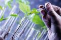 Посухостійкість озимих культур можна підвищити біопрепаратами, – дослідження