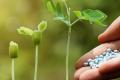 Дію міндобрив підсилюють фосформобілізатори, – дослідження