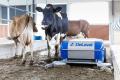 DeLaval презентував нових роботів-прибиральників для тваринництва
