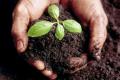 Держпродспоживслужба надіслала 578 нотифікацій країнам-експортерам рослинної продукції
