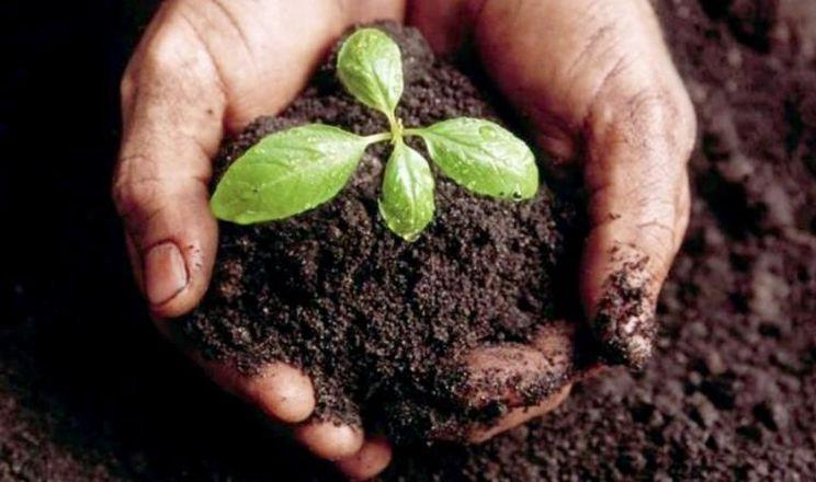 Процес деградації ґрунту невдовзі може стати незворотнім, – думка