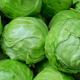 Ціна на ранню капусту скочується до найнижчих показників за 5 років