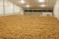 Держпрограма розвитку промислового картоплярства допоможе побудувати 35 картоплесховищ