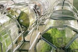 У Японії відкривають гігафабрику проростків брокколі