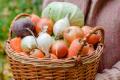 Овочі «Органік-Д» потрапили у супермаркети
