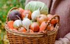 Старі овочі борщового набору знову подорожчали