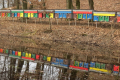 Бджолярі Луганщини розвиватимуть племінні пасіки за підтримки USAID