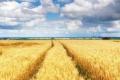 Агросектор до 2030 року має стати основою економічного сталого розвитку України