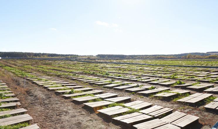 Равликова ферма Snails House поки відклала розширення площі вирощування
