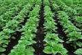 Програма STOP СТРЕС підвищила врожайність сільгоспкультур