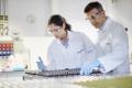 Syngenta застосує технології штучного інтелекту Insilico Medicine для ЗЗР