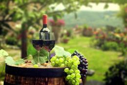 Бессарабські винороби та виноградарі просять підтримки уряду
