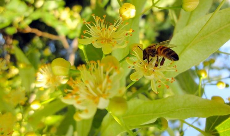 Прохолодніше літо дозволить на 30-40% збільшити збір меду