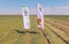 Презентація гібридів цибулі від компанії «Бейо» на полях Херсонщини