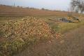 Херсонські фермери викидають зіпсовані овочі біля доріг