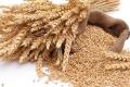 Експорт зернових та зернобобових перевищив 32 млн тонн