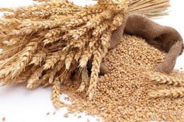 Експорт зернових та зернобобових перевищів 32 млн тонн