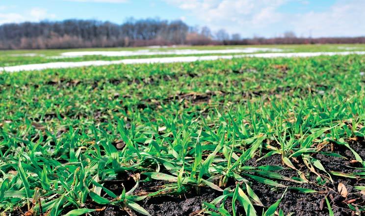 Фітосанітарний стан ґрунту: що змінилося за останні роки