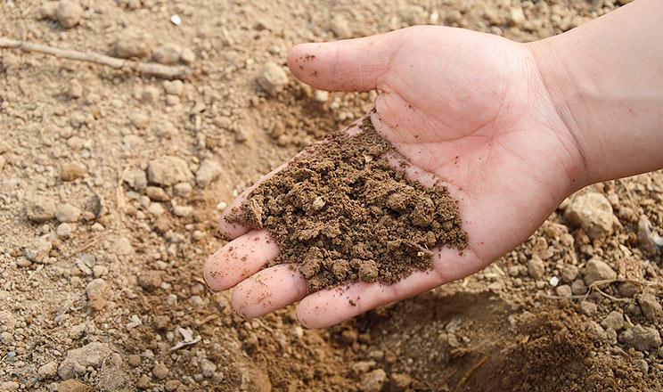 Код здорового ґрунту