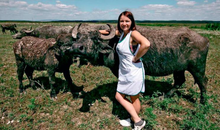 Повернення буйволів