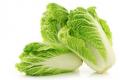 Названо оптимальну температуру зберігання японських гібридів пекінської капусти