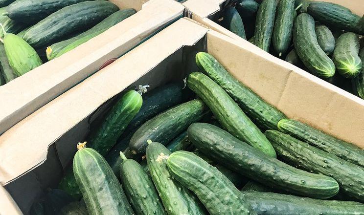 З настанням весни ціни на тепличні огірки знижуються