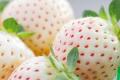 У США представили новий сорт білої суниці садової