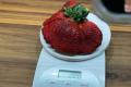 В Ізраїлі виростили найбільшу в світі ягоду суниці садової