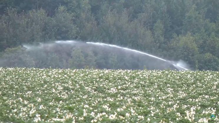 Погода в липні стримувала ріст картоплі та буряків