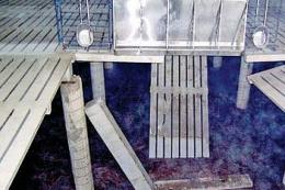 «Невидимі» пошкодження бетонної щілинної підлоги у свинарнику: ремонтувати чи замінити