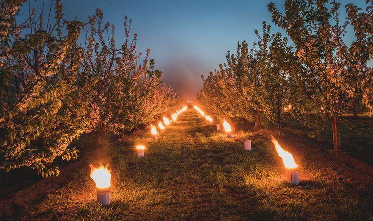 Від заморозків у садах на Одещині встановлять свічки або теплові гармати
