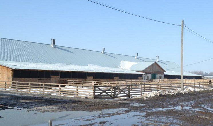 «Агро-Модуль груп» планує наростити поголів'я овець до 10 тис. голів