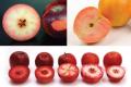Яблукам із кольоровим м'якушем пророкують успіх клубних сортів
