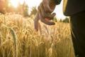A.G.R. Group придбав два агропідприємства на Херсонщині