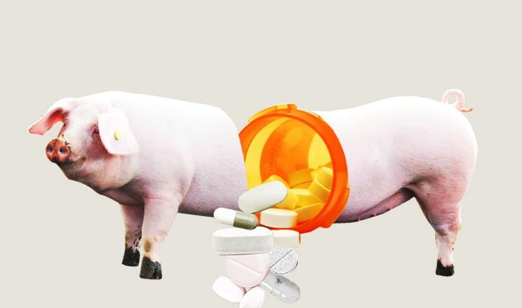 В Україні завершили наймасштабніше дослідження щодо застосування антибіотиків у тваринництві