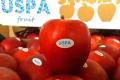 Україна розширила експорт яблук у ще 9 африканських країн