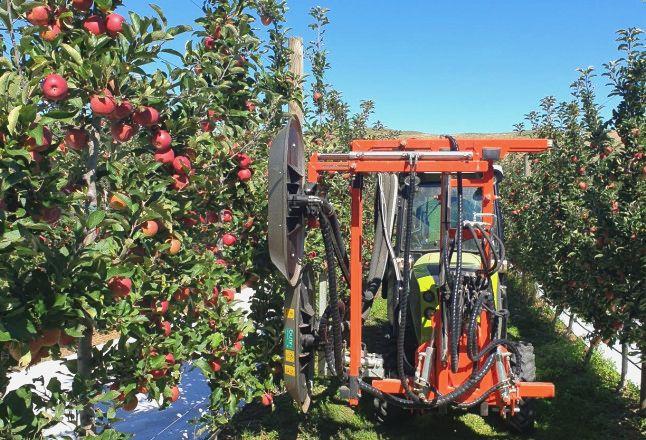 Дефоліатор дозволив отримати добре забарвлених яблук на 15% більше