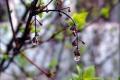 В Україні подекуди дощитиме