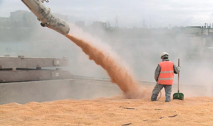 Світове виробництво зернових досягне 2226 млн тонн, - IGC