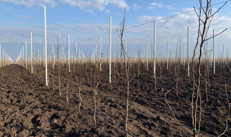 «Сади Дніпра» розпочали висаджувати грушевий сад