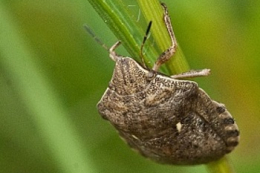 Агрокліматичні умови посприяли розвитку шкідників