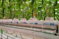 Датчики контролюватимуть ріст огірків у теплиці