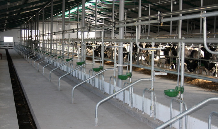 «Земля Переяславщини» обладнала комфортні стійла для корів