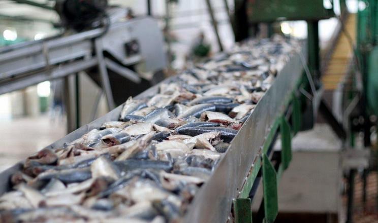 Україна має шанс стати великим переробником риби, – думка
