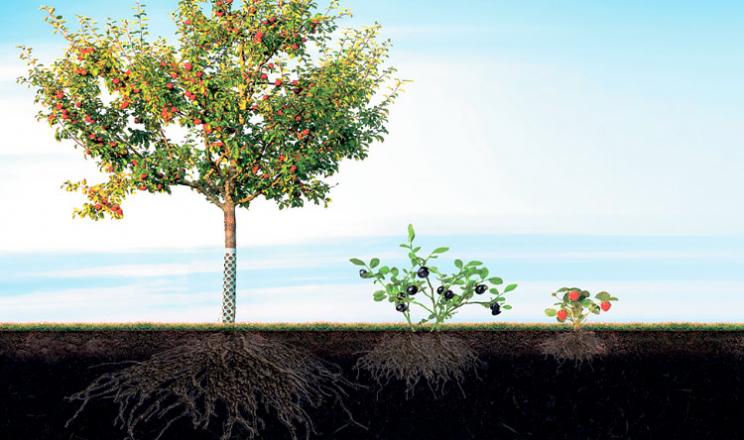 Добре функціонує коріння – буде врожай!