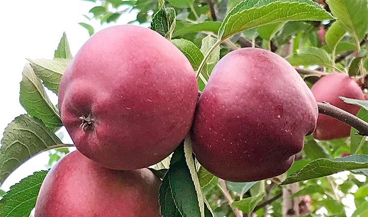 Щоб влучити «В яблучко!»