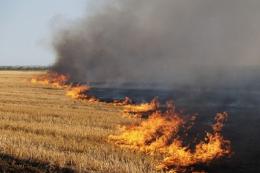 Після спалювання сухостою ґрунт відновлюється щонайменше 5-6 років